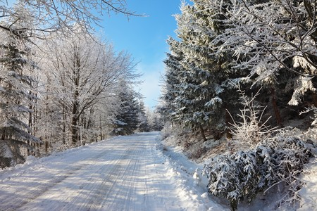 Solar New Year's morning in the woods. Rolled snowy road Stock Photo - 8023651