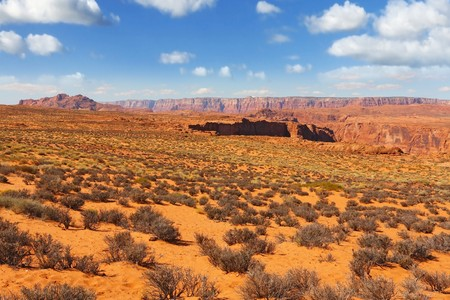 trampled: Walking around the famous Horseshoe Canyon in the U.S.. Trampled sandy slope, overgrown with bushes dry