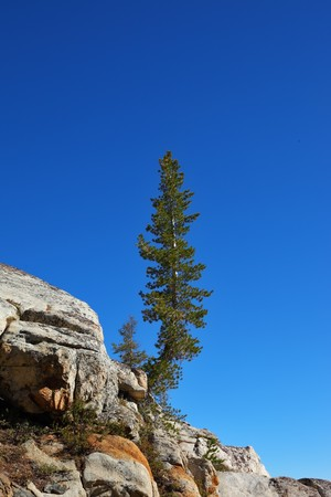 breakage: Early clear autumn morning. A pine on stone breakage at lake in national park Yosemite