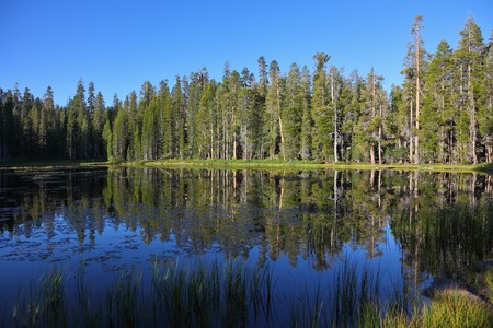 superficial: Early clear autumn morning. The superficial dark blue lake surrounded by pines in Yosemite national park Stock Photo