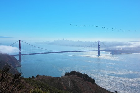 The well-known bridge Golden Gate in San Francisco.The birds flight in a morning fog photo