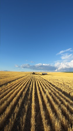 The farm in wheaten fields of Montana after harvesting photo