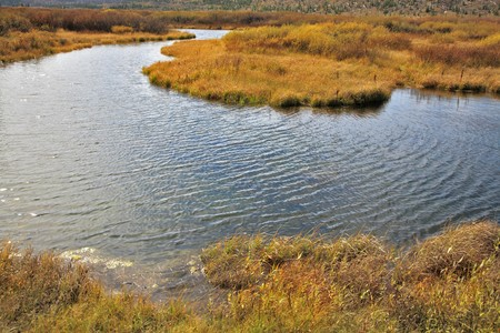 Silent soft autumn day - plain, a yellow grass and a stream in Yellowstone national park Stock Photo - 8257174