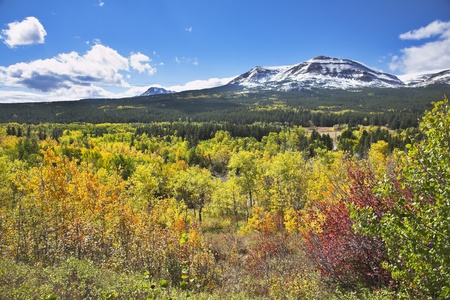 Fine multi-colour autumn in national park  Stock Photo - 8330630