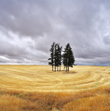 Some trees in fields after harvest photo