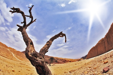 Dry tree in ancient mountains of desert Stock Photo - 8331411