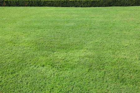 Magnificent green lawn in beautiful well-groomed park photo