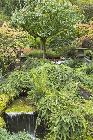 A small stream and a falls in Japanese to a garden in the big park photo