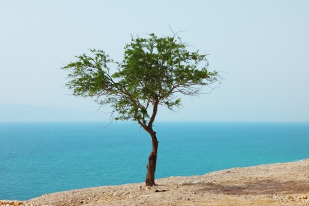 Picturesque tree on dry cliff above the Dead Sea Stock Photo - 8556495