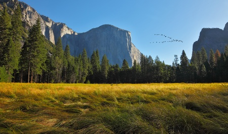 grandiose: Grandiose landscape and birds flight  in a valley world-wide well-known Yosemite park. Sunrise, autumn