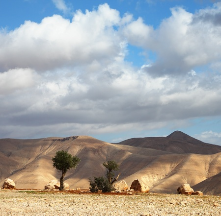 judean hills: Magnificent transparent day in Judean desert. Easy shades from clouds on soft hills