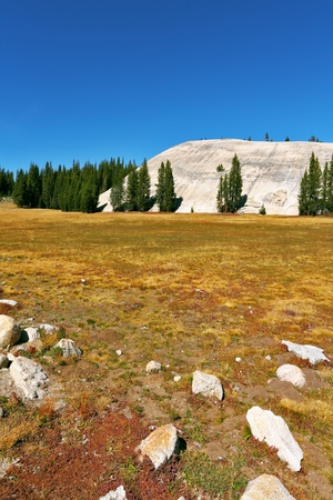 midday: The most beautiful glade in Yosemite national park on  midday