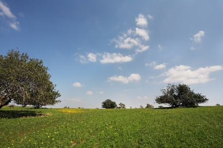 Wonderful serene spring day. Field, fresh green grass, beautiful trees and light clouds Stock Photo - 9101264