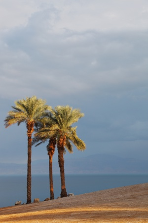 Empty beach and palm trees on the shore of the Dead Sea. Gorgeous day in January, a clear sky and clear air. Israel photo