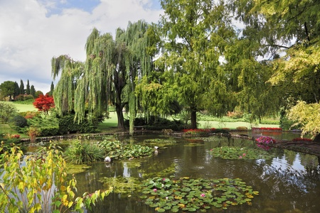 Phenomenally beautiful park-garden Sigurta. Shallow pond, trees and flowers photo