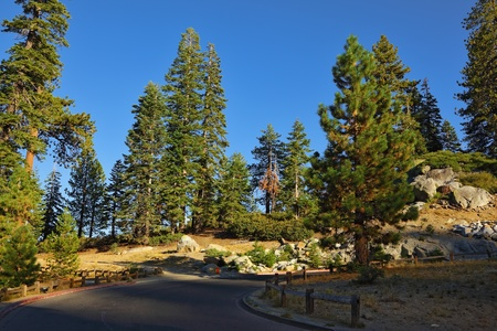 Mountains and pines on a sunset. A survey platform in Yosemite national park - Glacier Point. photo