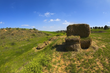 The oblique grass is collected in high stacks photo
