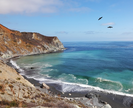 Two gray pelicans in clear serene day are turned over coast of Pacific ocean photo