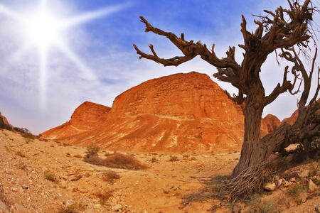 Dry tree in ancient mountains of desert photo
