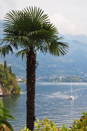 Lake Como in the misty haze  Magnificent tree in park on the shore - Villa Balbianella photo