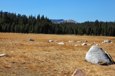 Fields and mountains in Yosemite national park Stock Photo - 14006231