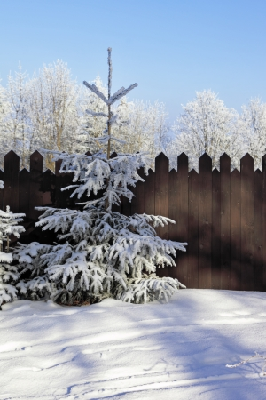 A snowy winter morning in the Tatras  Forest and the high wooden fence photo