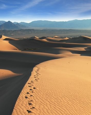 sudden: Crest of the dune. Early morning in the desert. Sudden shadows, subtle ripples in the sand and traces of the night desert animals