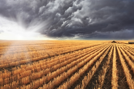 A huge storm cloud is almost completely covered the sky.  Shining sun peeks out from under the clouds.   The harvest in the fields of Montana photo