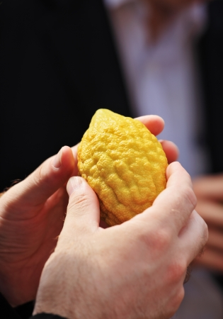etrog: Jewish autumn holiday of Sukkot. Beautiful mans hands hold a ritual fruit a citron