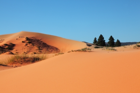 Roundish forms of orange, yellow both pink sandy dunes and four small fur-trees photo