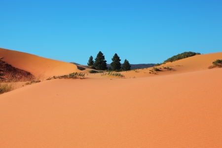 Roundish forms of orange, yellow and pink sandy dunes and four small fur-trees photo