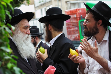 Religious Jews chooses ritual plant - citron- on the bazaar on the eve of Sukkoth September 22, 2010, Sukkoth market, Bene Brak, Israel Editorial