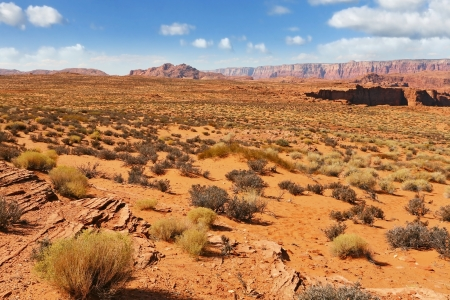 trampled: Walking around the famous Horseshoe Canyon in the U S   Trampled sandy slope, overgrown with bushes dry Stock Photo