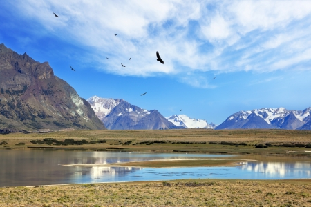 The wide valley surrounded by snow-capped mountains. A flock of Andean condors flying on the lake with clear water. Summer in the Argentine Patagonia