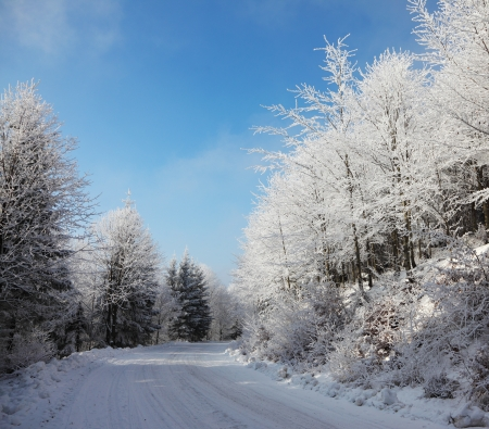 knurled: Christmas morning. Snowy winter forest and knurled wide trails.  Stock Photo
