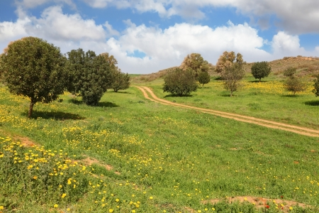 Spring in Israel  Cloud in March at noon, the rural dirt road, field and small trees photo