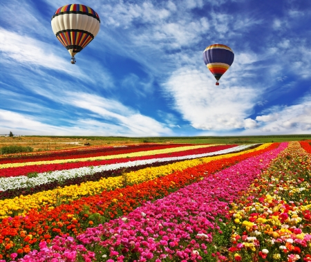 buttercups: Great multicolored rural field with flowers.  Over field flies the huge air balloon