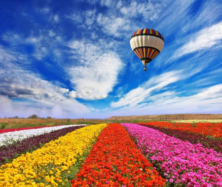 Elegant multi-color rural fields with flowers  Over field the huge air balloon flies Archivio Fotografico
