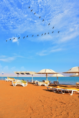 A nice sunny day at the Dead Sea resort. Yellow beach chairs and umbrellas waiting for tourists. Over the sea flying flock of cranes photo