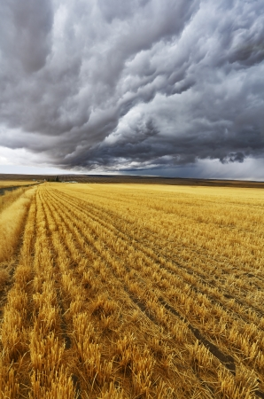 thundercloud: Enormous thundercloud above fields of Montana