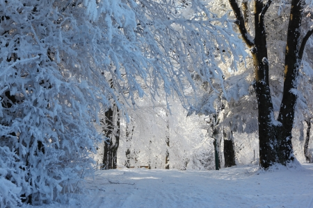tatras: A bright sunny winter morning in the Tatras. Forest and road in the snow