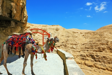Decorative red gate with a cross on a mountain road going to the temple. Wadi Kelt near Jerusalem. Dromedary Camel in the beautiful blanket for transportation of tourists and pilgrims photo