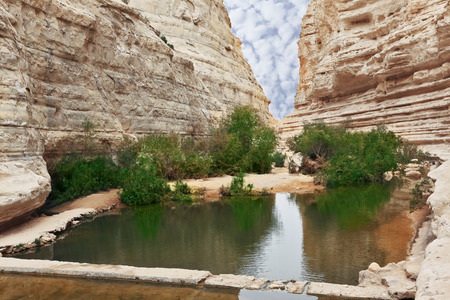 canyon negev: Very picturesque canyon Ein Avdat in the Negev desert  Yellow-brown canyon walls and green bushes are reflected in the creek Zin and small square pool