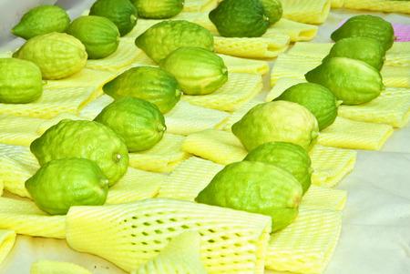 sukkot: Frutta Ritual - citron sul bazar tradizionale vacanza a Gerusalemme. Ebraica vacanza autunnale di Sukkot Archivio Fotografico