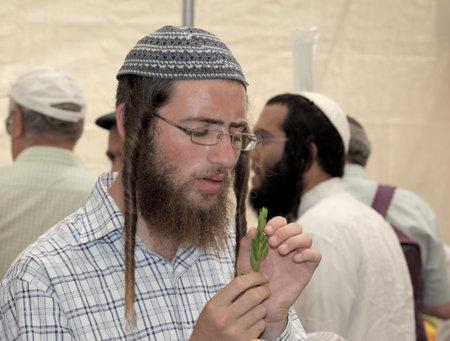 sukkot: JERUSALEM, ISRAEL - SEPTEMBER 18, 2013: Young religious Jew with long sidelocks carefully chooses ritual plant - myrtle for Sukkot