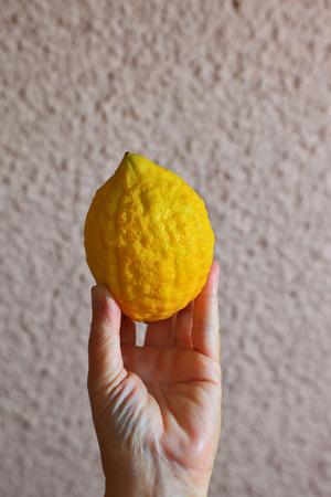 sukkot: Ritual agrume giallo - etrog in una mano femminile. Autunno festa del raccolto nella tradizione ebraica - Sukkot
