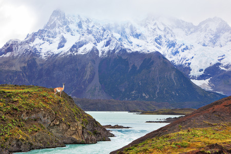 Neverland Patagonia. Snow-capped mountains of the national park Torres del Paine. Icy emerald water of the mountain river flows between hills. On the shore stands small vicuna photo