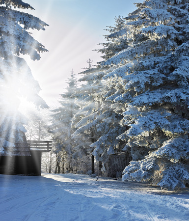winter's tale: The Winters Tale. Solar Christmas morning in a snowy forest