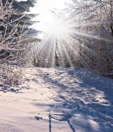 christmas morning: Solar Christmas morning in a snowy forest. The Winters Tale