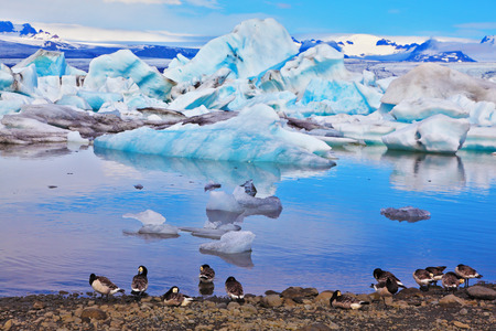 drifting ice: Drifting ice floes and flying geese are reflected in an ocean lagoon. J?kuls?rl?n Glacial Lagoon in Iceland